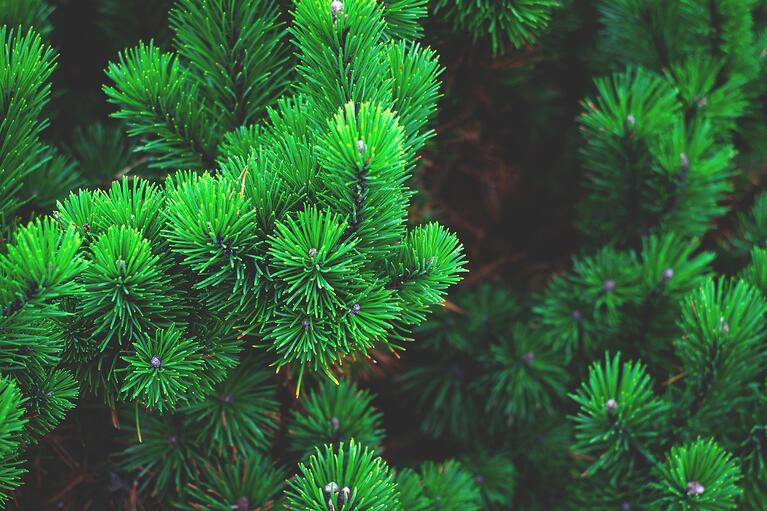 What is evergreen content? And why should you love it?