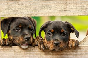 Positive news stories: puppies