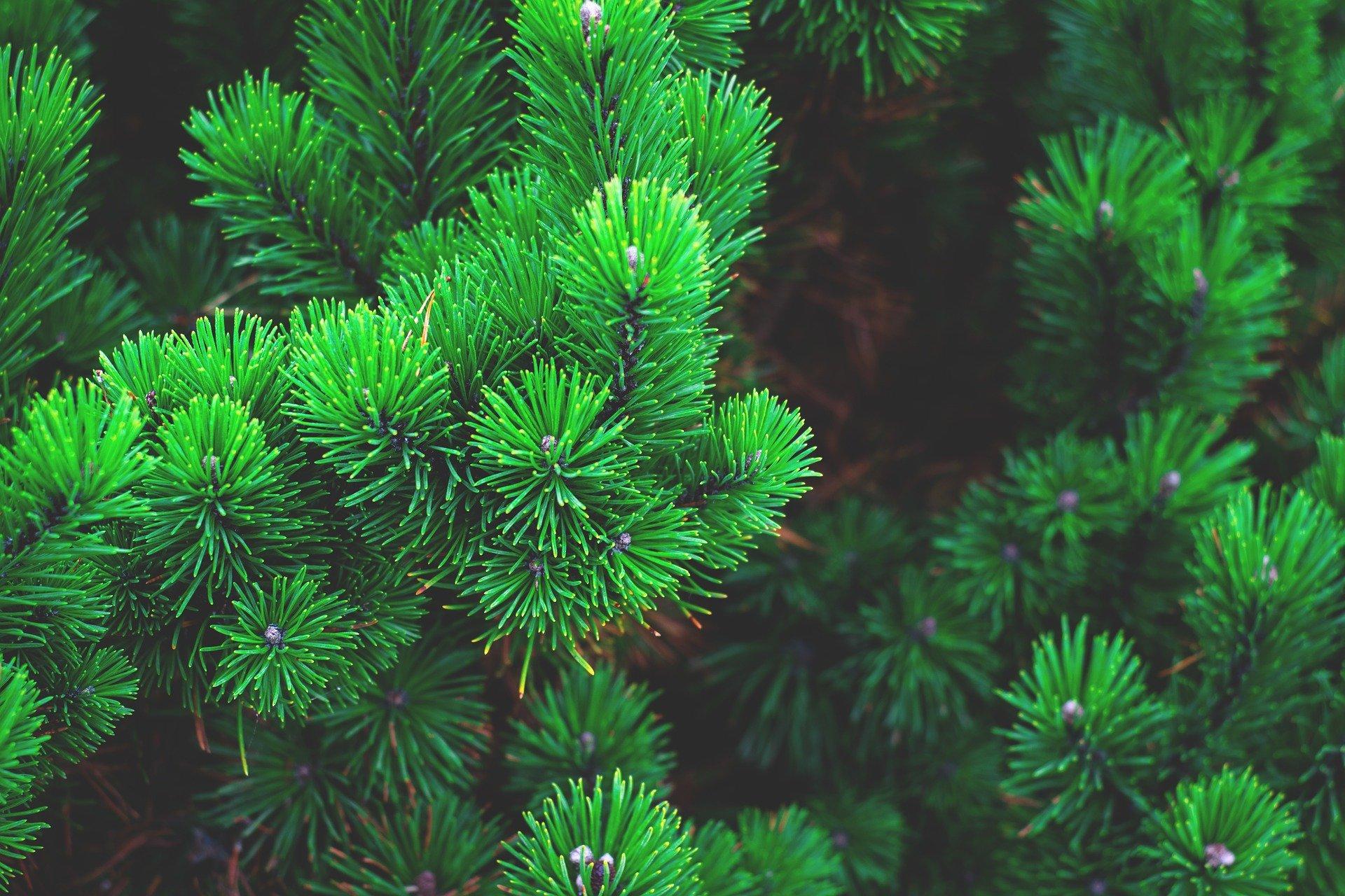 What is evergreen content? | Recruitment Marketing | BlueSky PR